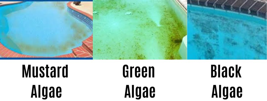 How to protect your swimming pool from Algae